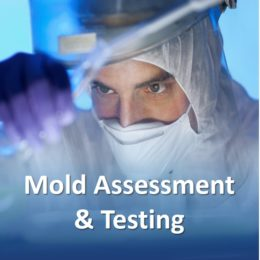 Dallas, Allen, McKinney, Richardson, Frisco, Carrollton Residential black mold services and inspection, testing