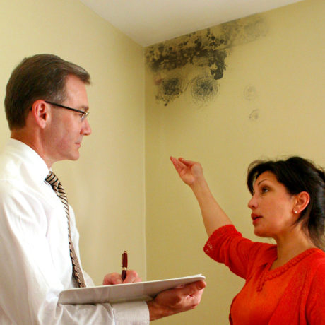 Mold Mess black mold remediation and air restoration Dallas Plano Texas